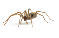 Atlanta Spider Removal